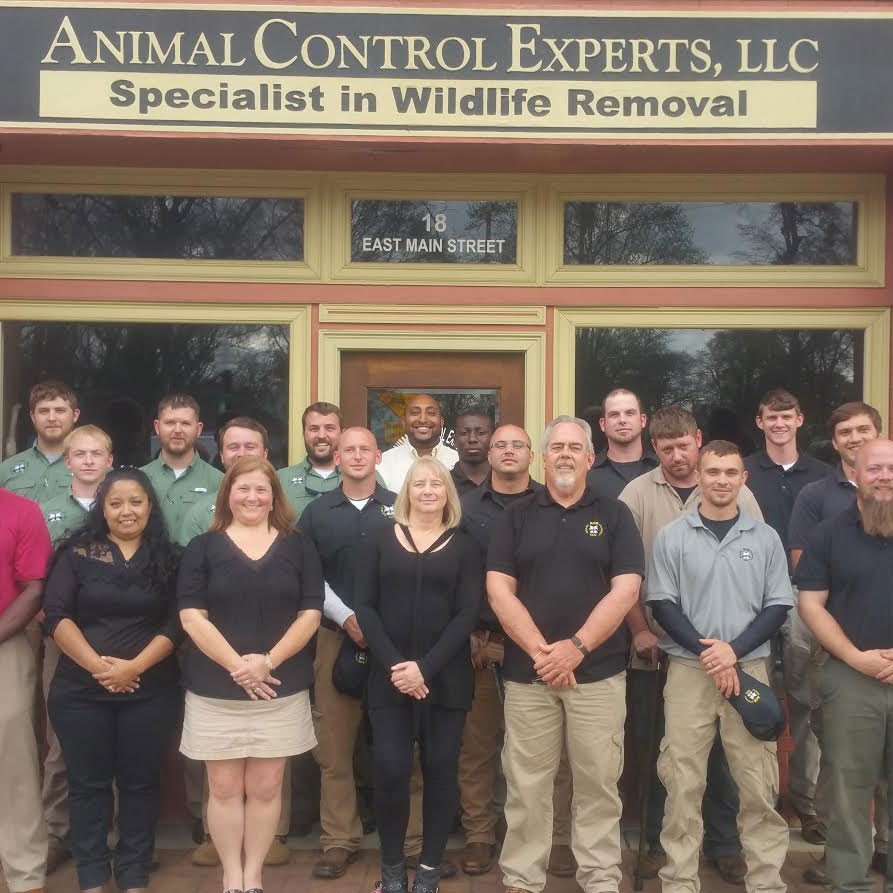 Animal Control Experts Team